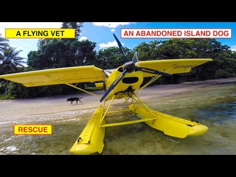 FLYING VET w ABANDONED ISLAND DOG