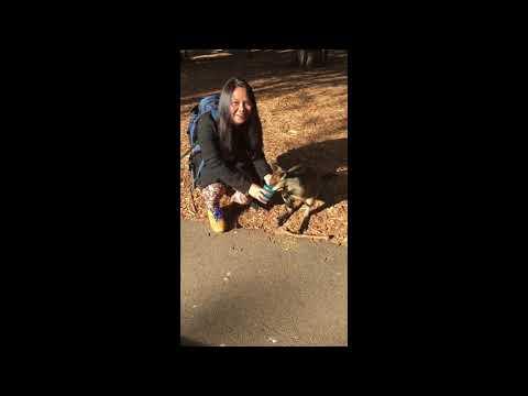 Wallaby Kangaroo | First Time Encounter | Sydney | Darwin NT 🇦🇺 | Australia