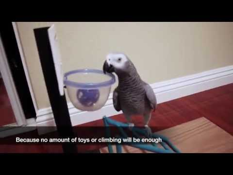 My Bird is More Trained Than Your Dog!