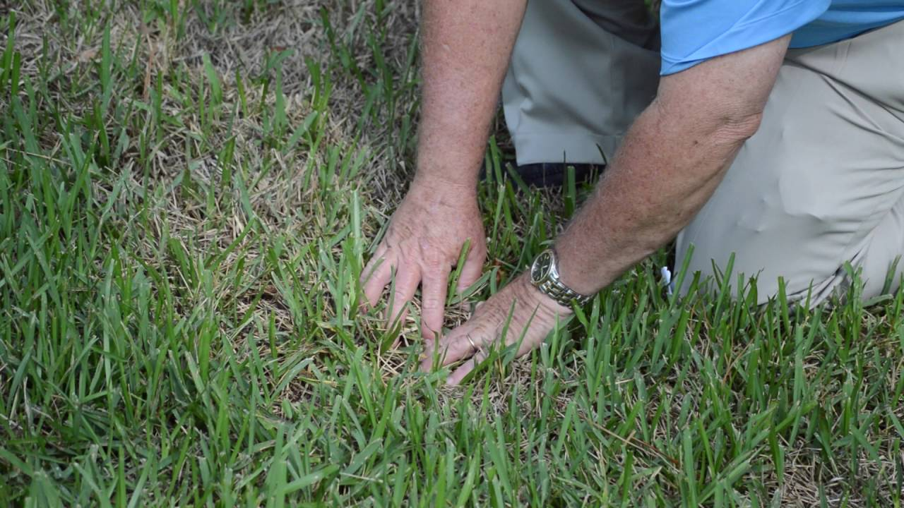 Does your lawn have Chinch Bugs or Mole Crickets?