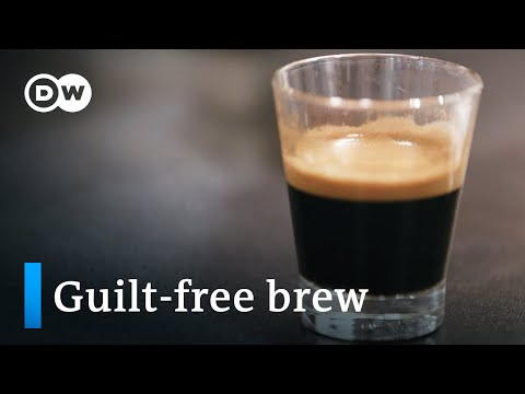 The perfect coffee – fair trade and sustainable | DW Documentary