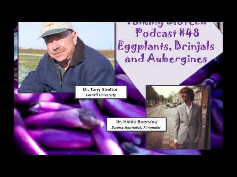 Talking Biotech 048 --  GE Eggplants, Brinjals and Aubergines