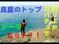 釣りよかガバチョで シイラ ヒット!! の動画、YouTube動画。