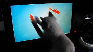 кіт і комп'ютер (Павло Салаш - ех рибалочка , риболовля)
