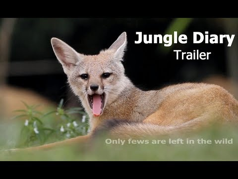 Jungle Diary Trailer & Project Introduction -Wildlife of  Bangladesh by Firoz Al Sabah
