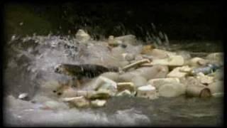 Vpro Beagle Trailer: Spanish Version/en Español