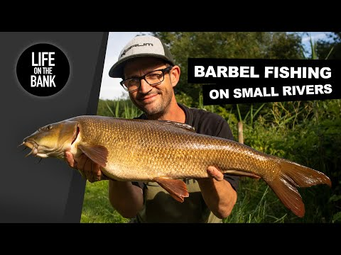 BARBEL FISHING ON SMALL RIVERS