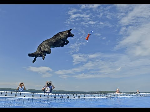 Best of Ultimate Air Dogs at 2017 Clayton Seaway Splash