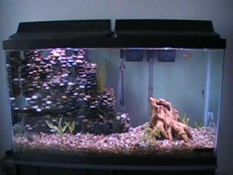 55 gallon planted aquarium with homemade cliff new setup for 55 gallon fish tank setup