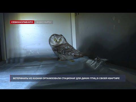 НТС Севастополь: «Хорошие новости» от 26 ноября 2020 года