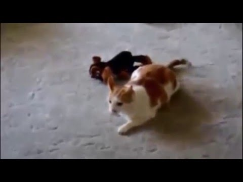 New Funny Cat Vs Dog Videos Compilation - Latest 2016