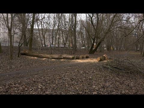 МТРК МІСТО: Негода валить дерева