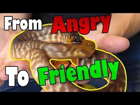 How to Tame an Aggressive Snake