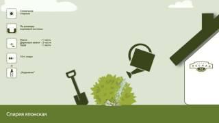 видео Создаём наш собственный огород
