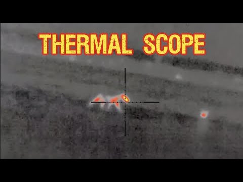 Coyote Hunting with THERMAL SCOPES