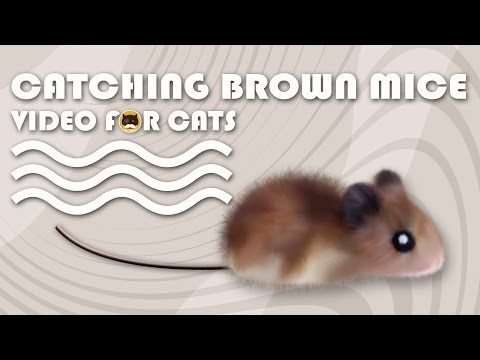 CAT GAMES - Catching Brown Mice! Mouse Video for Cats to Watch.