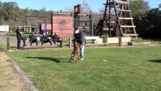 K9 Dogs Training - Teaching A Bark On Person