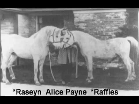 +Raseyn   Kellogg Foundation Stallion
