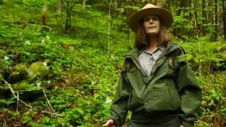 Sacred Mountain Of The Smokies - The Biodiversity Of Mt Le Conte