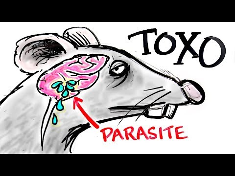 Toxoplasma - The Parasite That Turns FEAR Into DESIRE