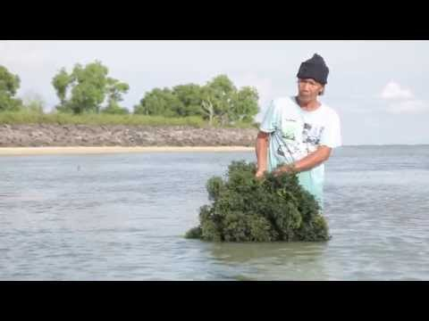 Cultivation of seaweed - natural ingredients by-cosmetics