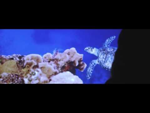 HIDDEN TRUTH     Ocean Pollution Campaign