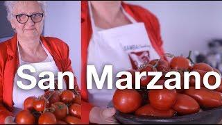 🍅 SAN MARZANO PARA MOLHO DE TOMATE ITALIANO E CONSERVA - Pomodoro San Marzano Caratteristiche