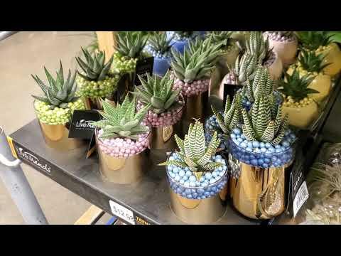 PLANT SHOPPING   DONNA JOSHI