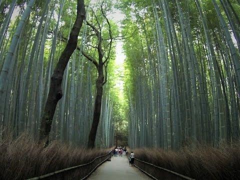 JAPAN TRIP OSAKA - TOKYO DAY 4 [Oct.22nd, 2015] - KYOTO