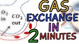Biology Help: The Respiratory System - Gas Exchange In The Alveoli Explained In 2 Minutes!!