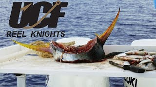 Reel Knights 2018: Episode VI Fish Tales