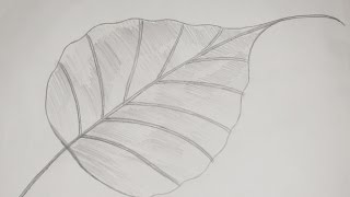 How to Draw and Sketch Ficus religiosa (Peepal) Leaf #6