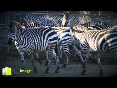 New Image Industries Production- Ramona Animal Rescue