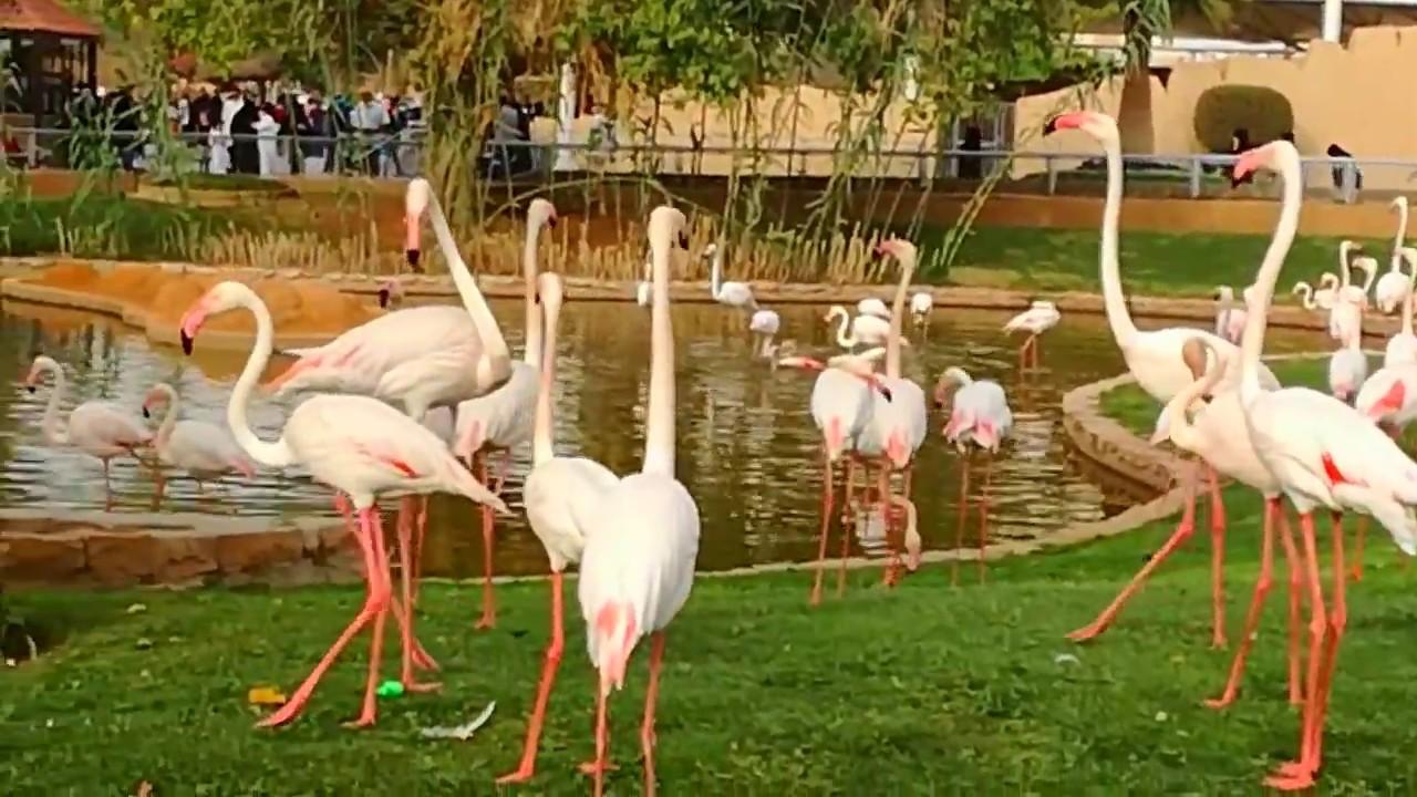 حديقة الحيوانات بالملز الرياض Youtube
