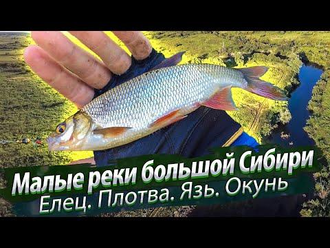 Малые реки Новосибирска, Россия. Рыбалка на мирную рыбу. Елец, плотва, язь, окунь. 2018/08