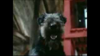 Песня про собак
