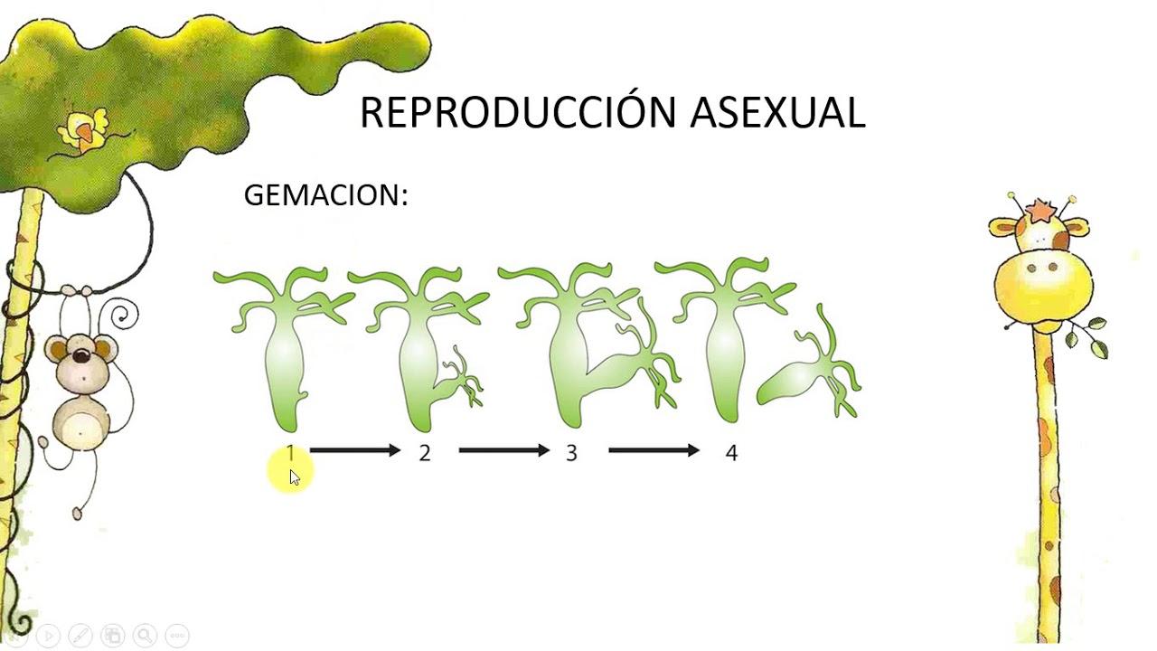 La Reproducción Asexual En Los Animales Aprende En Casa Ii Un1ón Jalisco