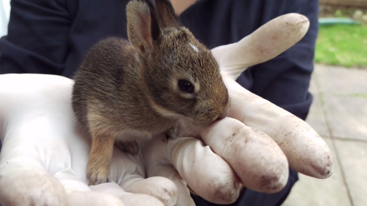 wild rabbit nest with babies in toronto backyard youtube