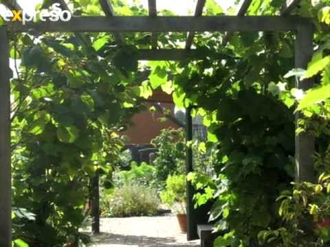 Gardening: Plant choices for Pergolas (3.4.2012) - Gardening: Plant Choices For Pergolas (3.4.2012) - YouTube