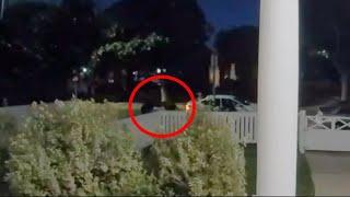 Il video del rapimento dei cani di Lady Gaga, gli spari e poi la fuga: dogsitter in fin di vita