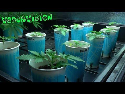 2018 Cali Legal Grow * Day 15 * Moisture Levels for Living Soil?