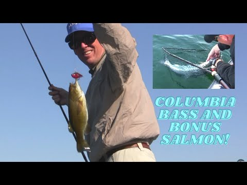 Arlington bass on the columbia river 2012 youtube for Columbia river fish counts
