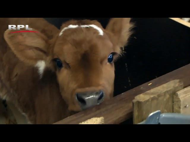 Boer Bert deel 2 van 3, Bedrijvigheid in Woerden - RPL TV Woerden - 7 juni 2013