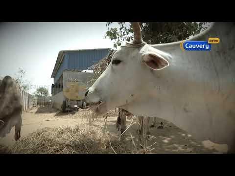 Organic Farmer Jaishankar - Agaram to Sigaram - Cauvery TV
