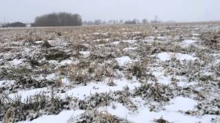 Cover Crops in Ontario, Canada with Blake Vince