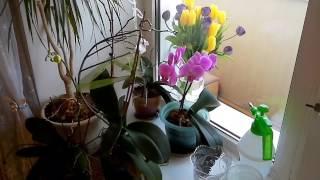 видео Грибы в горшке у орхидеи... ч.1