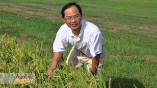 Scientists to help farmers grow organic rice