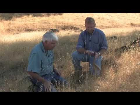 Guidelines for Residual Dry Matter on Coastal and Foothill Rangelands in California