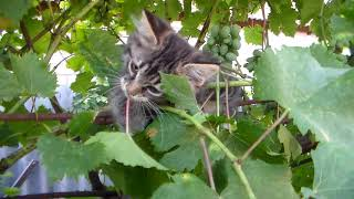 Котики играются во дворе. Прикольно, красиво, интересно Херсон 2.08.2014 домашние животные. Природа