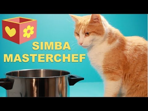 Cute cat part six   Bellboxes   Simba the master chef   6  